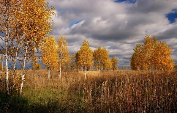 Картинка Небо, Облака, Осень, Деревья, Clouds, Sky, Fall, Autumn, Trees