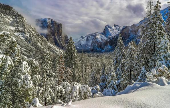 Картинка зима, лес, снег, горы, ели, долина, Калифорния, California, Yosemite Valley, Национальный парк Йосемити, Yosemite National …