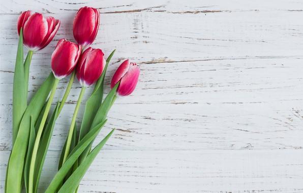 Картинка цветы, тюльпаны, розовые, fresh, wood, pink, flowers, tulips, spring
