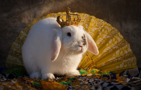 Картинка животное, корона, кролик