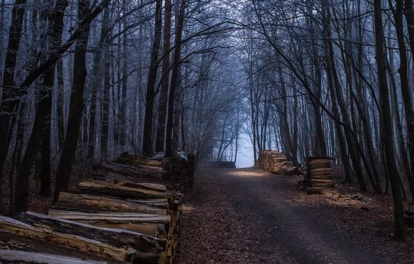Картинка Осень, Лес, Fall, Дорожка, Autumn, Forest, Path, Дрова