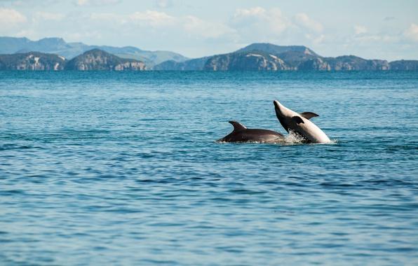 Картинка sea, playing, enjoying, dolphins