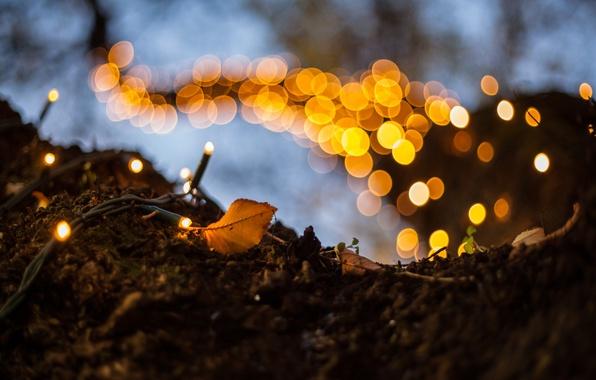Фото обои свет, лист, гирлянда, боке