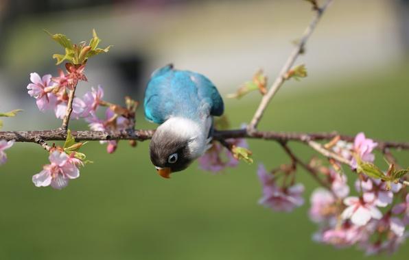 Фото обои цветение, птица, попугай, ветка, цветы