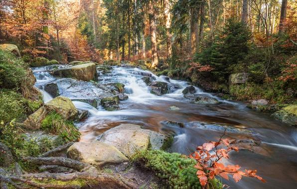 Фото обои Германия, деревья, кусты, мох, Selkefall, осень, лес, солнце, трава, ручей, камни