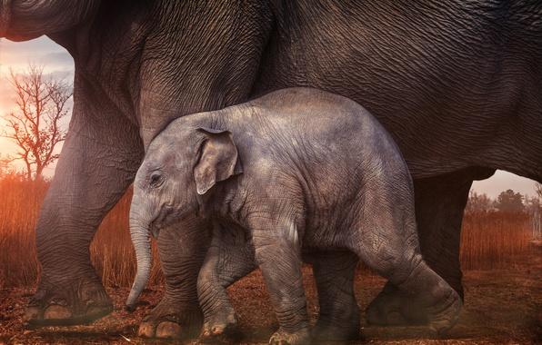 Картинка малыш, слоны, слонёнок