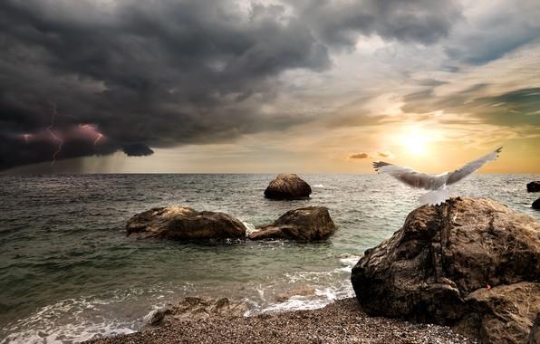 Картинка море, гроза, небо, солнце, тучи, камни, дождь, птица, берег, молния, фотошоп, чайка, горизонт