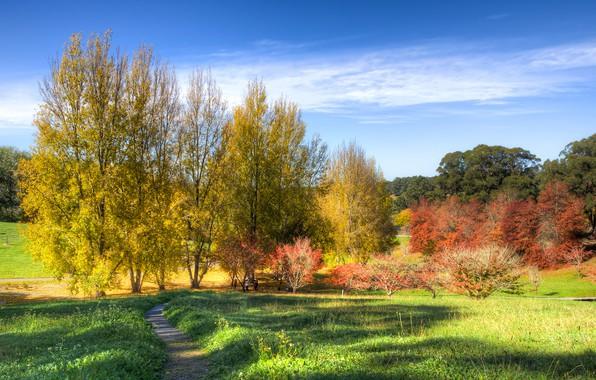 Картинка осень, небо, трава, солнце, облака, деревья, парк, Австралия, тропинка, кусты, Mount Lofty Botanic Garden