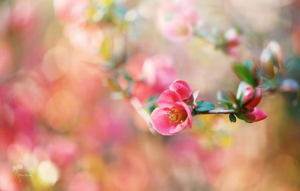 Картинка цветок, макро, ветка, весна, боке