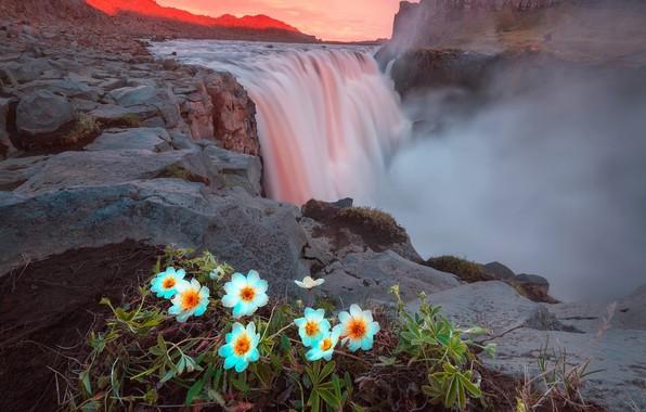 Картинка лето, свет, цветы, горы, скалы, водопад, вечер, Исландия