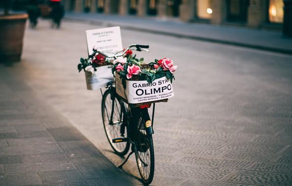 Картинка цветы, велосипед, розы