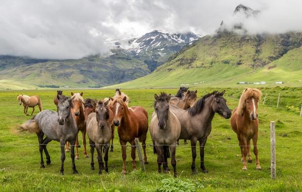 Фото обои пейзаж, долина, трава, облака, табун, загон, лошади, горы