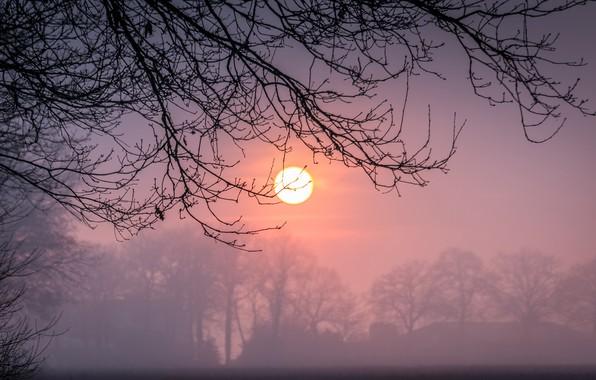 Картинка зима, солнце, закат, ветки, туман