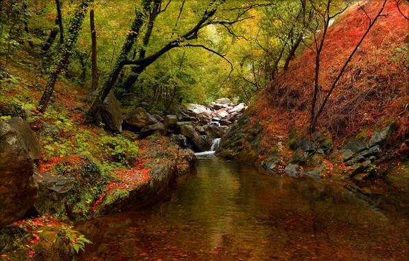 Картинка Осень, Деревья, Лес, Fall, Речка, Autumn, River, Forest, Trees
