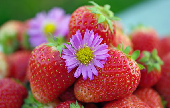 Картинка осень, цветы, природа, ягоды, красота, позитив, урожай, земляника, клубника, десерт, витамины, сентябрь, дача, лакомство, красный …