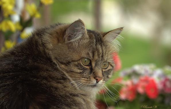 Картинка кот, взгляд, мордашка, котэ, котофеич, серьёзный товарищ