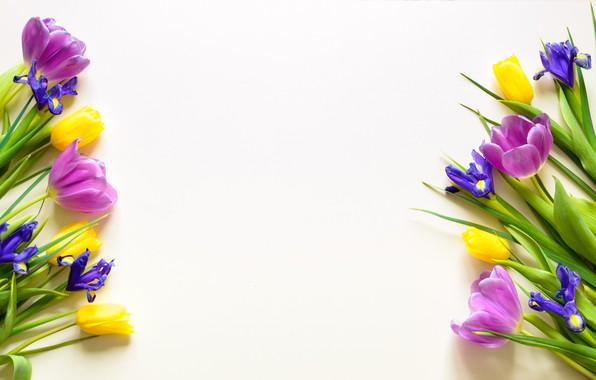 Картинка фон, Цветы, весна, тюльпаны, ирисы