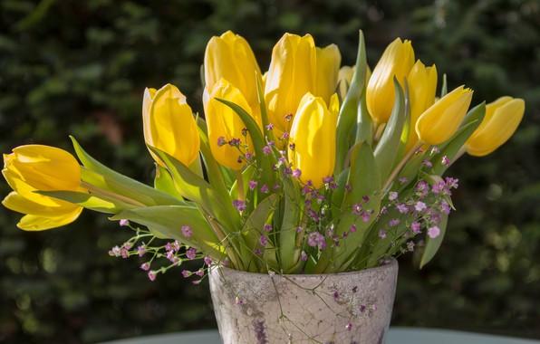 Картинка букет, тюльпаны, ваза, бутоны, жёлтые тюльпаны, гипсофила