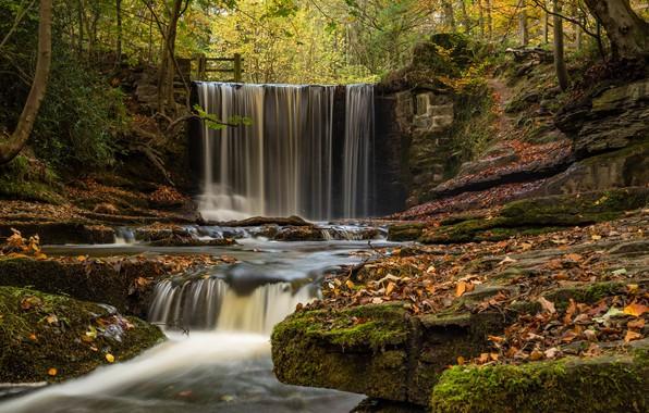 Картинка осень, лес, листья, скала, река, листва, Англия, водопад, England, Уэльс, Wales, Рексем, Plas Power Woods, …