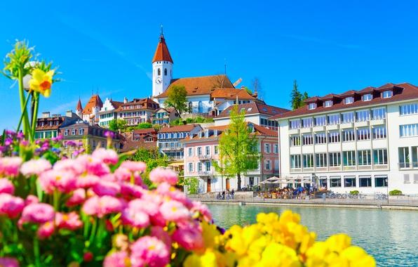 Картинка цветы, река, здания, дома, Швейцария, набережная, Switzerland, река Аре, Aare River, Thun, Тун
