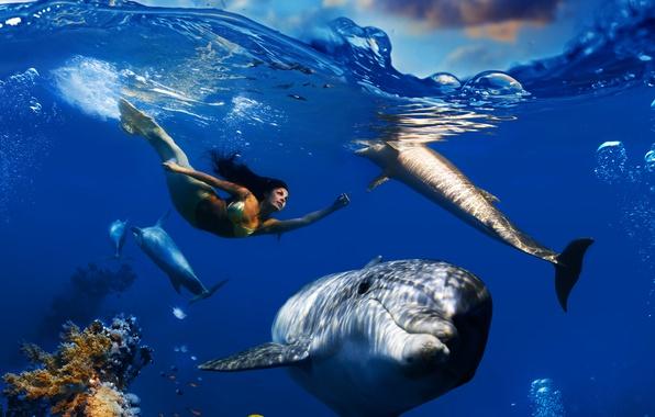 Картинка море, волны, небо, облака, рыбы, пузырьки, русалка, кораллы, дельфины, подводный мир, под водой, плавает