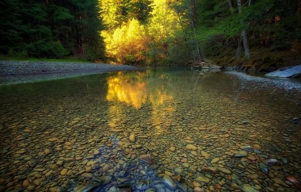 Картинка Вода, Природа, Отражение, Деревья, Лес, Листья, Камни, Ветки