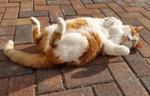 Картинка кошка, кот, релакс, сон, лапки, тротуар, расслабон, спящая