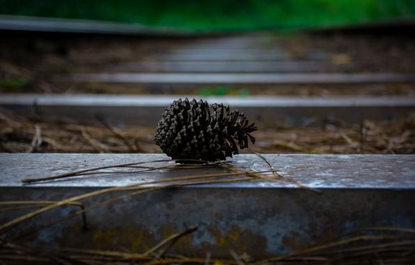 Картинка осень, железная дорога, шишка, шпалы