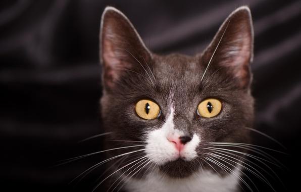 Картинка глаза, кот, усы, взгляд, котейка
