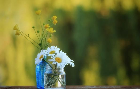 Картинка ромашки, банка, боке, лютики, бутылочка