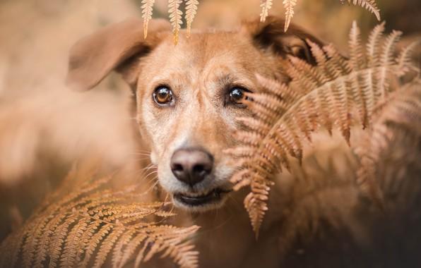 Картинка друг, собака, папоротник