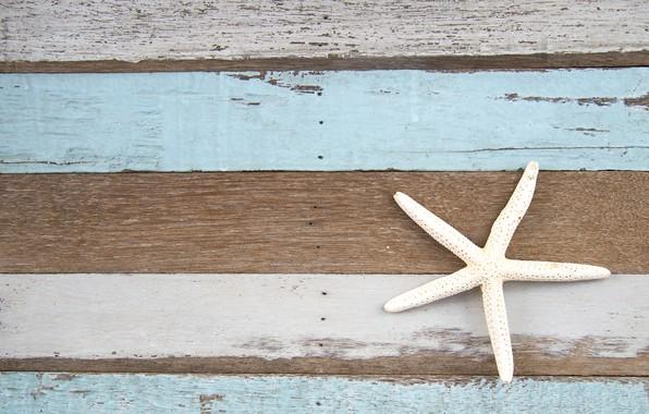 Картинка фон, дерево, доски, морская звезда, vintage, texture, background, marine, wooden, starfish