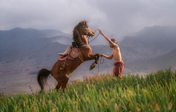 Картинка grass, mountains, fog, man, hill, slope, horse, training