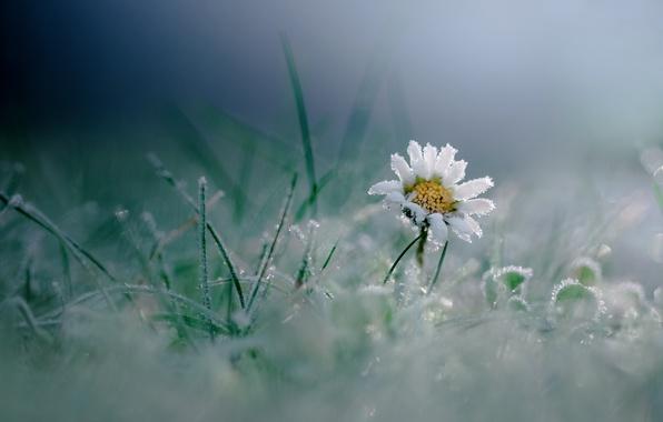 Картинка иней, цветок, трава, макро, мороз