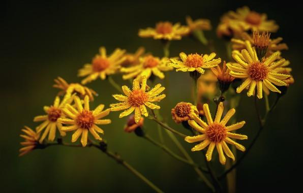 Картинка цветы, роса, боке