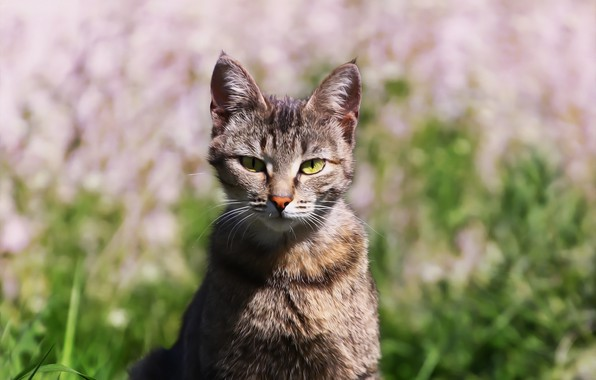 Картинка кошка, травка, киса