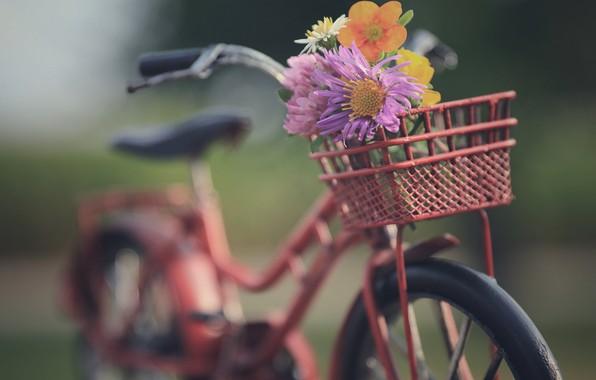Картинка цветы, велосипед, настроение, боке