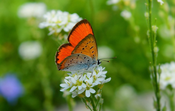 Картинка цветок, Макро, Бабочка, Flower, Macro, Butterfly
