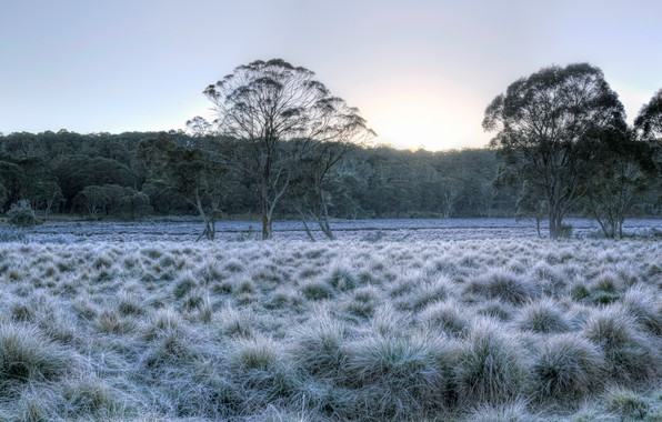 Картинка иней, лес, небо, трава, солнце, деревья, парк, рассвет, Австралия, Barrington Tops National Park