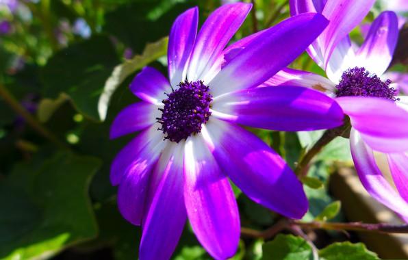 Картинка цветок, природа, лепестки, сад