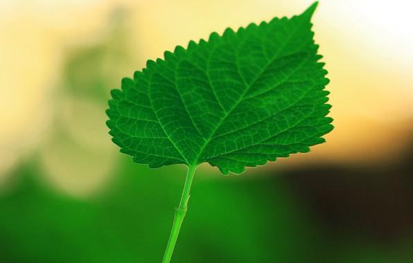 Картинка лето, природа, лист, краски
