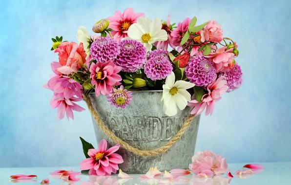 Картинка цветы, корзина, букет, розовые, хризантемы, pink, flowers, beautiful, композиция, георгины, floral