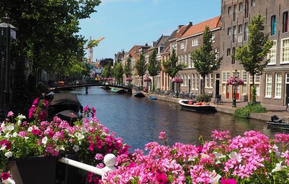 Картинка цветы, река, Дома, лодки, Улица, Здания, Цветочки, Нидерланды, набережная, Bridge, Flowers, Street, Netherlands, Мостик, Южная ...