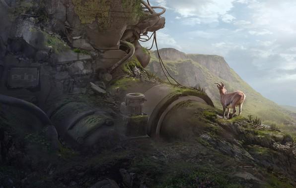 Картинка горы, олень, hillside, the clash between nature Vs industrialization, 4th World