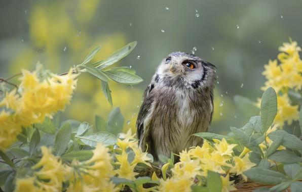 Картинка листья, капли, цветы, ветки, природа, сова, птица, птицы мира