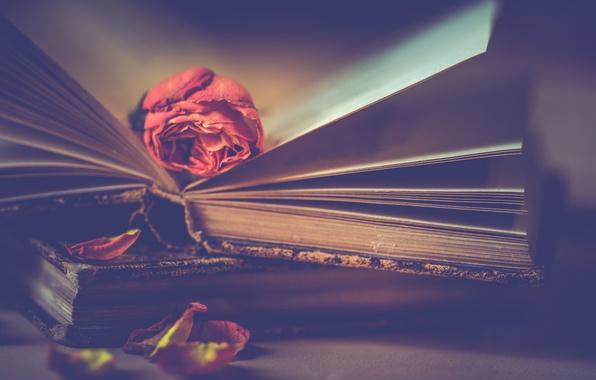 Картинка цветок, стиль, роза, книги, лепестки