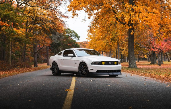 Картинка Mustang, Ford, white, '2009