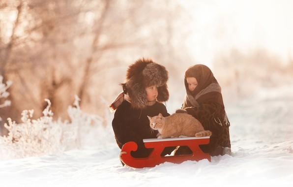 Картинка зима, кот, снег, дети, мальчик, девочка, санки