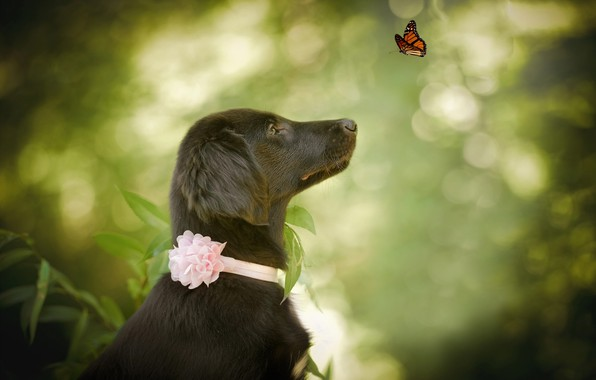 Картинка природа, животное, бабочка, собака, профиль, пёс, боке