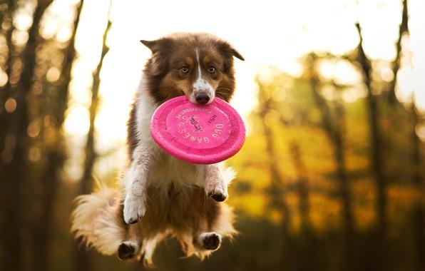 Картинка друг, игра, собака
